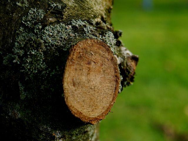 Cserjék és fák metszése