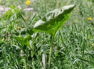 Gyomirtás fűben