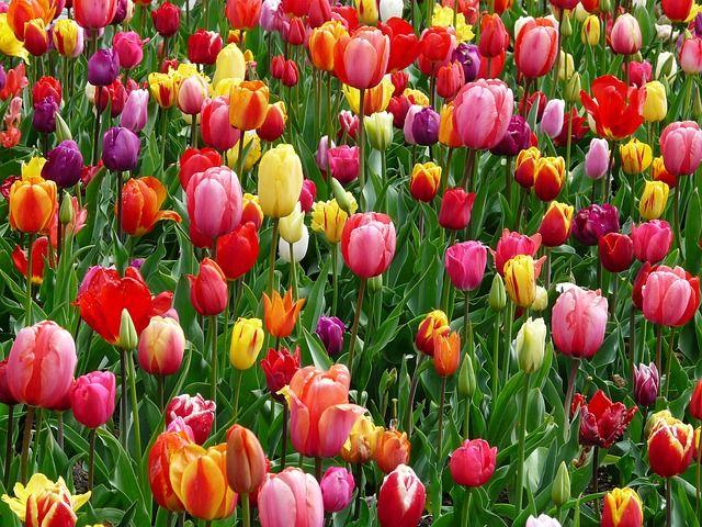 Virágok ültetése